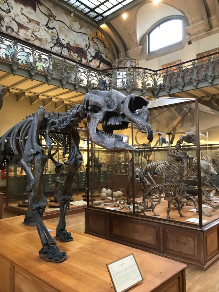 <CENTER><B>Musée National <br>d'Histoire Naturelle</B></CENTER>